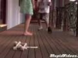 Puppy Defends Owner