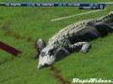 3 Legged Alligator Attacks Golf Tourney