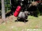 Ram Destroys Punching Bag