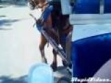 Horse Freaks Out And Woman Has A Break Down
