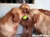 Tennis Ball Tug Of War