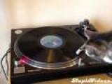 Cat Remixes Bob Marley