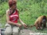 Howler Monkey Massage