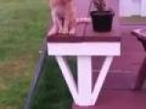Cat Sits Like Human
