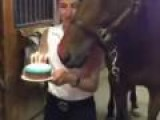 Horse Blows Out Own Birthday Candles