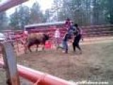 Bull Riding Rookie Gets The Horns