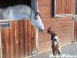 Baby Goat Tries To Fight Horse