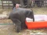 Baby Elephant Tries To Take Bath