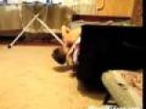 Cat Effortlessly Tackles Boy
