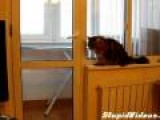 Cat Lets Herself Out