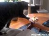 Cat Vs. Banana Peel