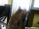 Cat VS Mirror