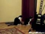Cat Tries To Apologize