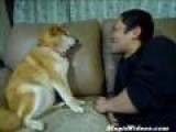 Dog Doesn' T Like Kisses