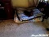 Dog Reacts To Stollen Bed