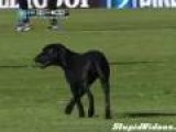 Dog Runs On Soccer Pitch