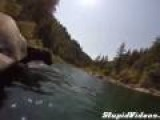 Dog Dives 12 Feet
