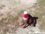 Dog Save Cat From Cup