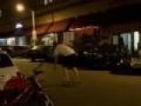 Drunk Guy Skateboard Fail