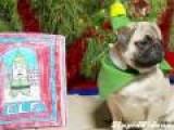 Elf As Recreated By Pugs