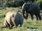 Elephant Attacks Rhino With Stick