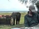 Elephant Crashes Brunch