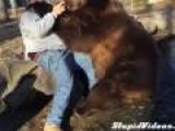 Friendly Grizzly Bear