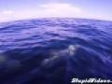 GoPro Dolphins