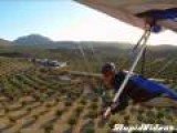 Hand Glider Lands In Trees