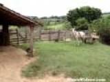 Horse Backs Cart In