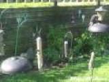 Incredible Squirrel Leap Bests Birdfeeder