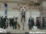 Japanese Gum Ad Has Giant Cat