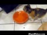 Kitten Protective Of Food