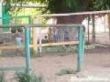 Kid's Dance