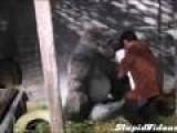 Mr. Go - The Baseball Playing Gorilla Trailer