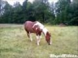 Majestic Farting Horse