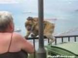 Mother Monkey Steals Ice Cream