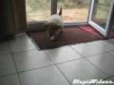 Polite Dog Wipes Feet On Welcome Mat