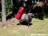 Ram Vs Punching Bag