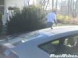 Turkeys Attack Mailman