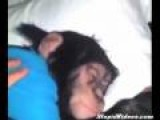 Wake Up Monkey!