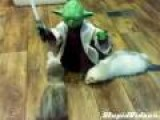 Yoda Teaches Ferrets How To Use The Force