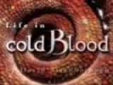 La Vida A Sangre Fría