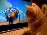Кысь смотрит мульт Pixar