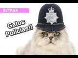 Gatos Policias!!