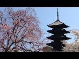 IPhone 4S と AR-4i で京都 東寺の不二桜と五重塔を撮ってみた Kyoto Toji Temple